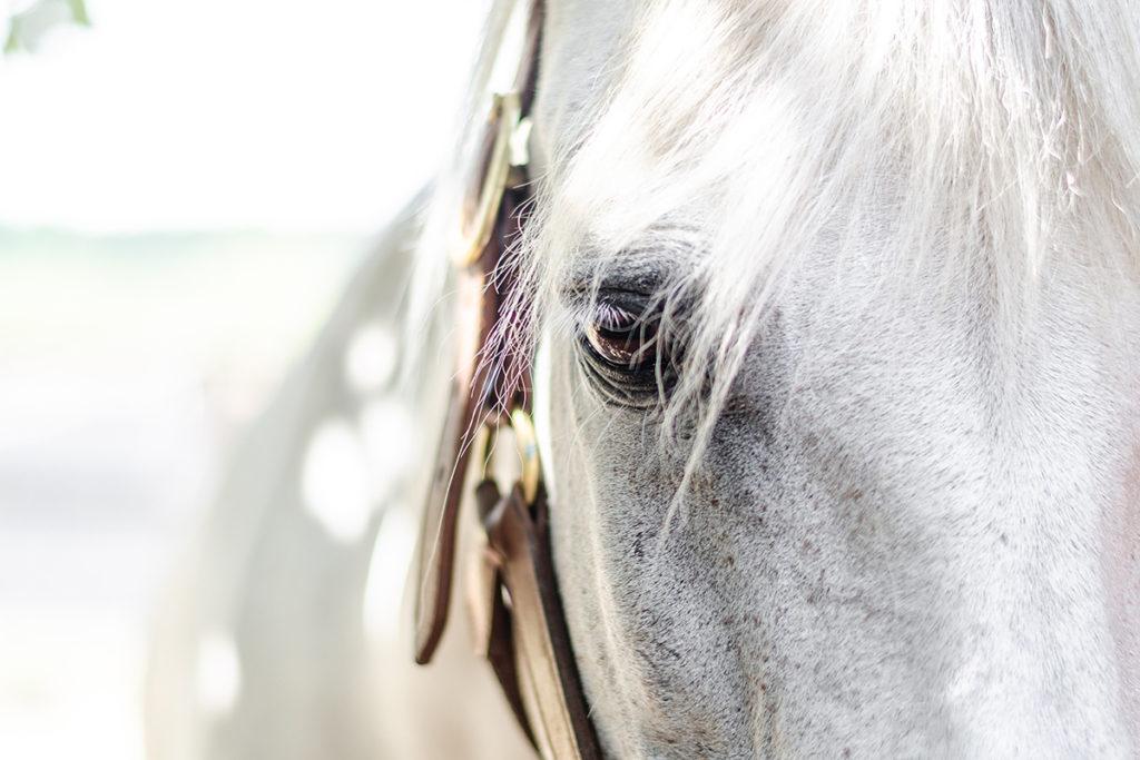coachen met paarden grow for it leiderschapscoaching
